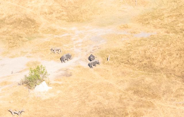sobrevolar en avioneta el delta del okavango (19)