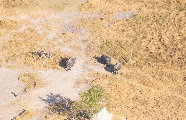 sobrevolar en avioneta el delta del okavango (20)