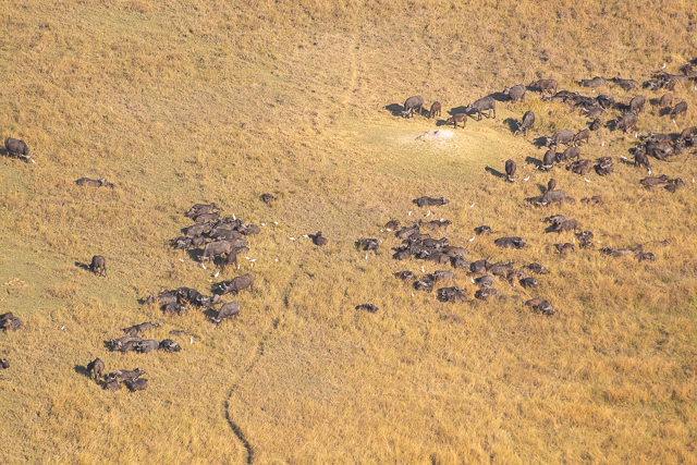 sobrevolar en avioneta el delta del okavango (26)