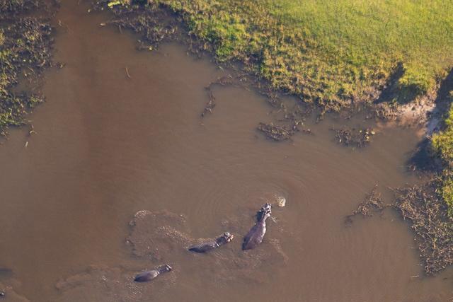 sobrevolar en avioneta el delta del okavango (35)