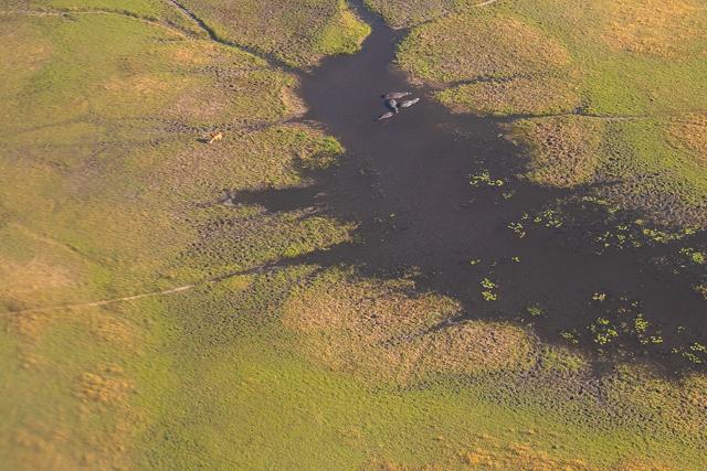 sobrevolar en avioneta el delta del okavango (39)