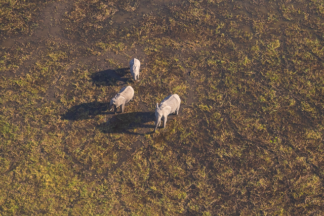 sobrevolar en avioneta el delta del okavango (40)