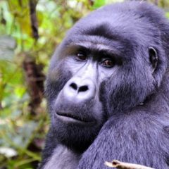 Uganda: Información útil para viajar