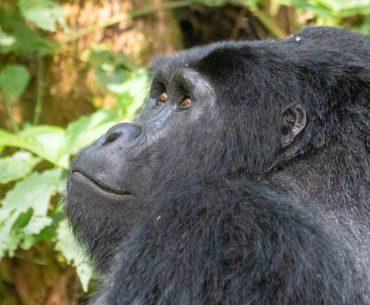 uganda informacion util para viajar