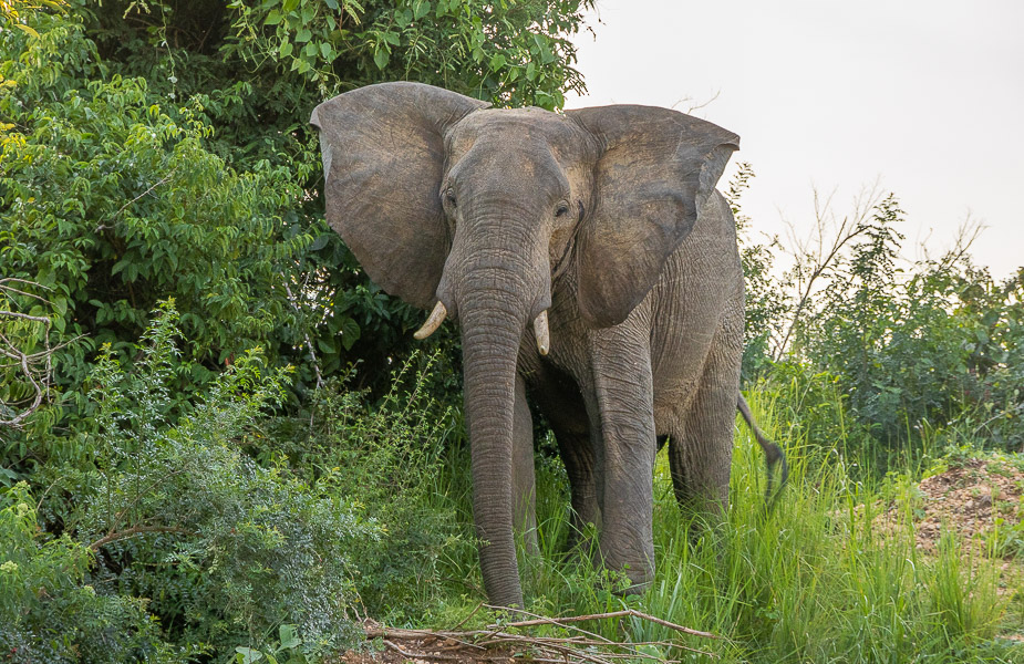 llegada-al-parque-nacional-murchinson-falls-uganda-4