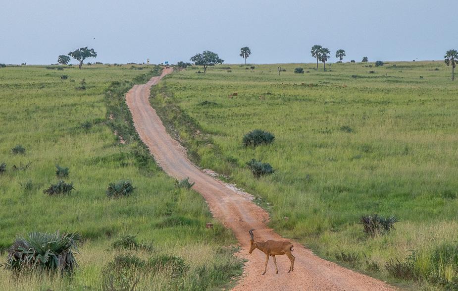 llegada-al-parque-nacional-murchinson-falls-uganda-7