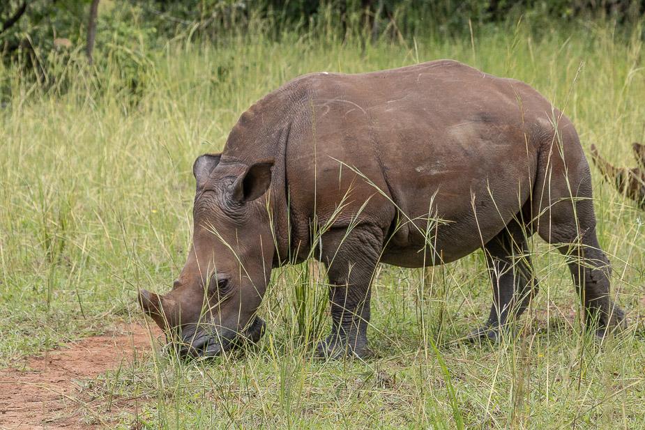 ziwa-rhino-sanctuary-10