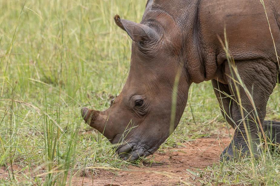 ziwa-rhino-sanctuary-11