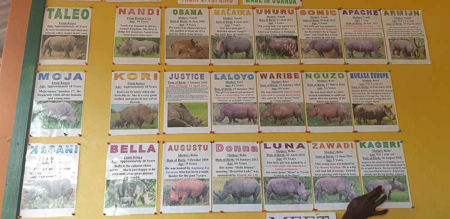 ziwa-rhino-sanctuary-12