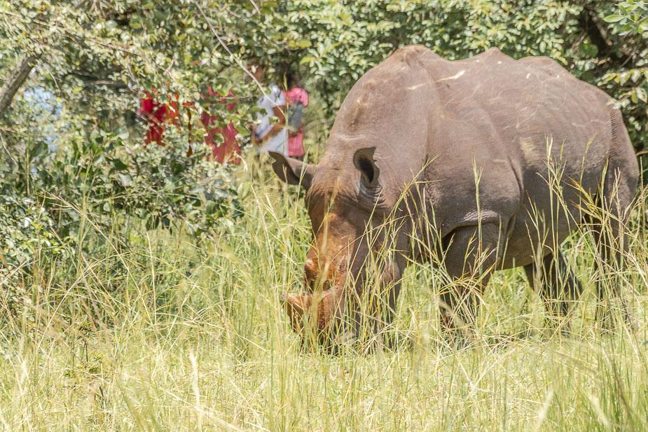ziwa-rhino-sanctuary-13