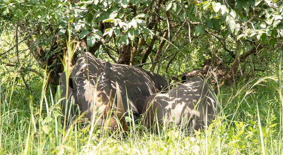 ziwa-rhino-sanctuary-2