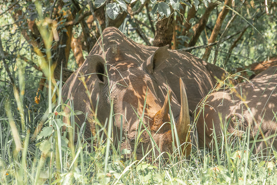 ziwa rhino sanctuary (3)