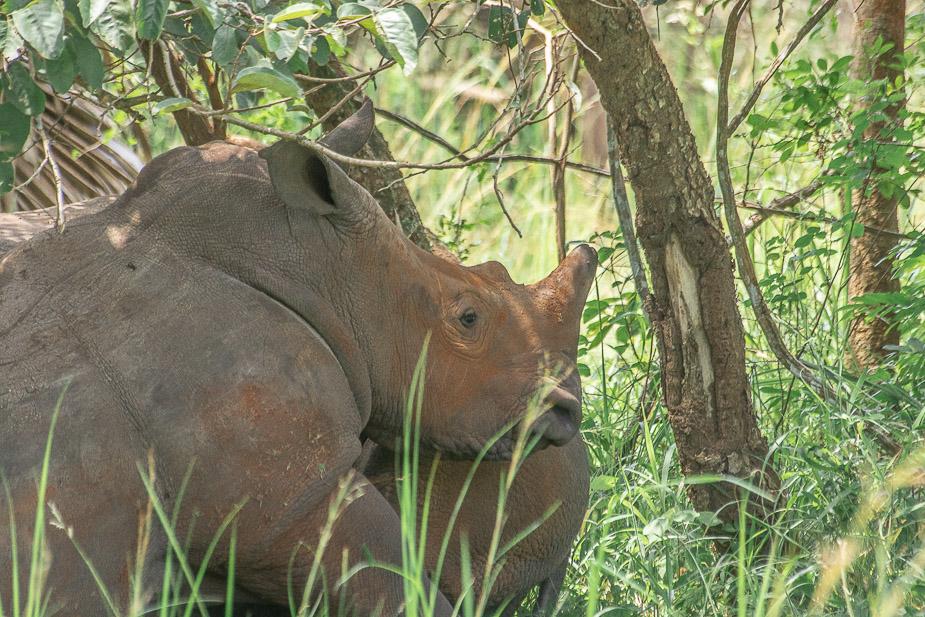 ziwa-rhino-sanctuary-4
