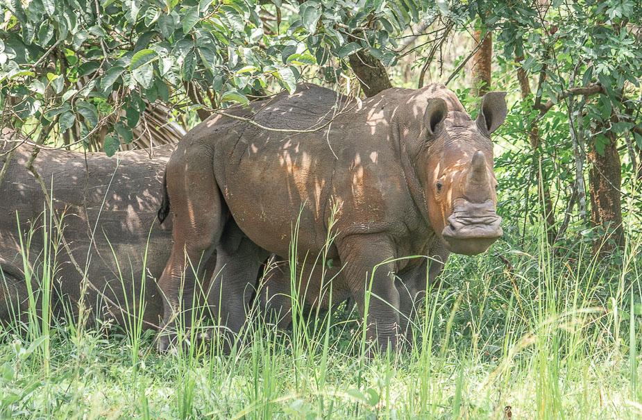 ziwa-rhino-sanctuary-5