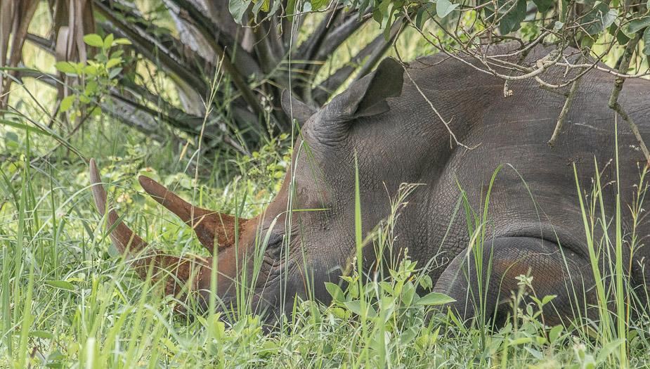 ziwa-rhino-sanctuary-6