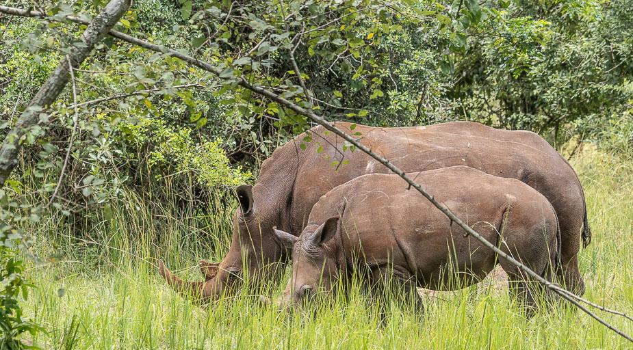 ziwa-rhino-sanctuary-8