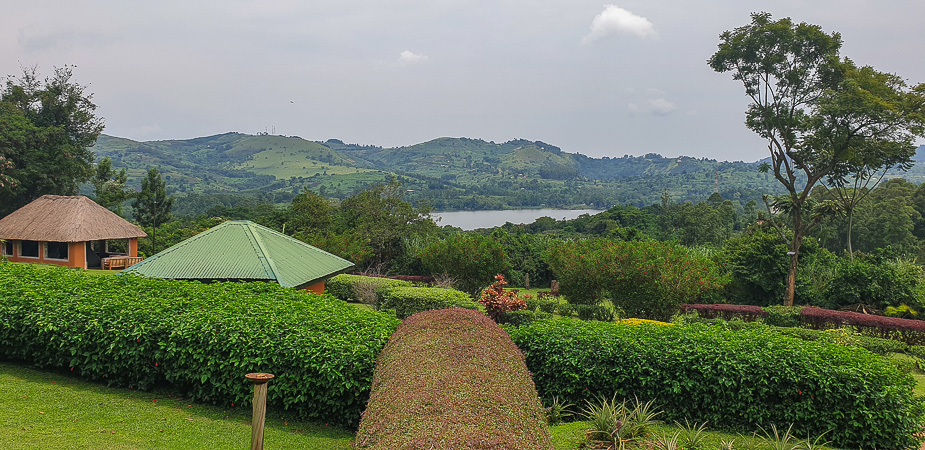 chimpazee forest guest house uganda (5)