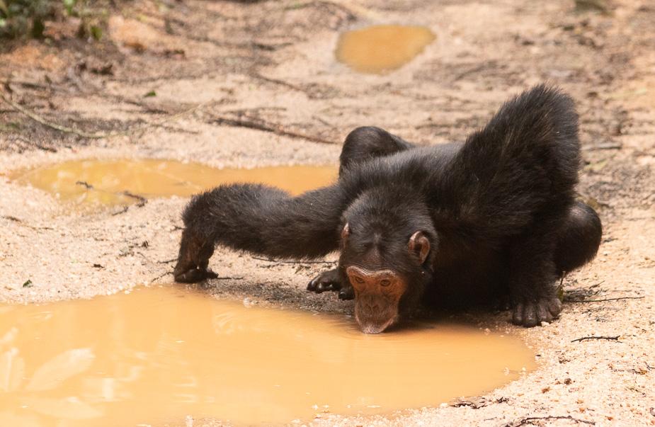 parque-nacional-kibale-chimpances-23