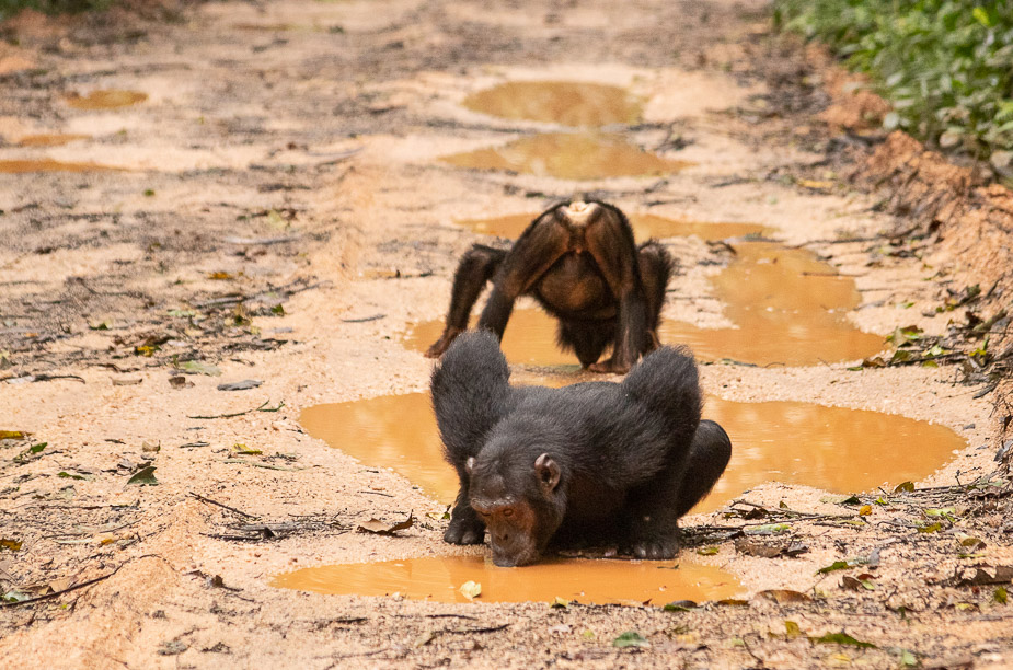 parque-nacional-kibale-chimpances-26