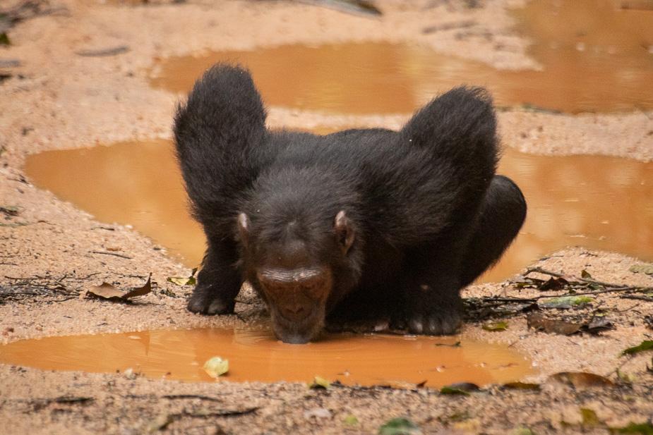 parque-nacional-kibale-chimpances-27