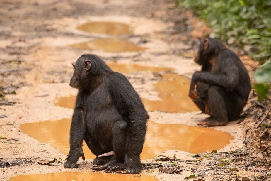parque-nacional-kibale-chimpances-28