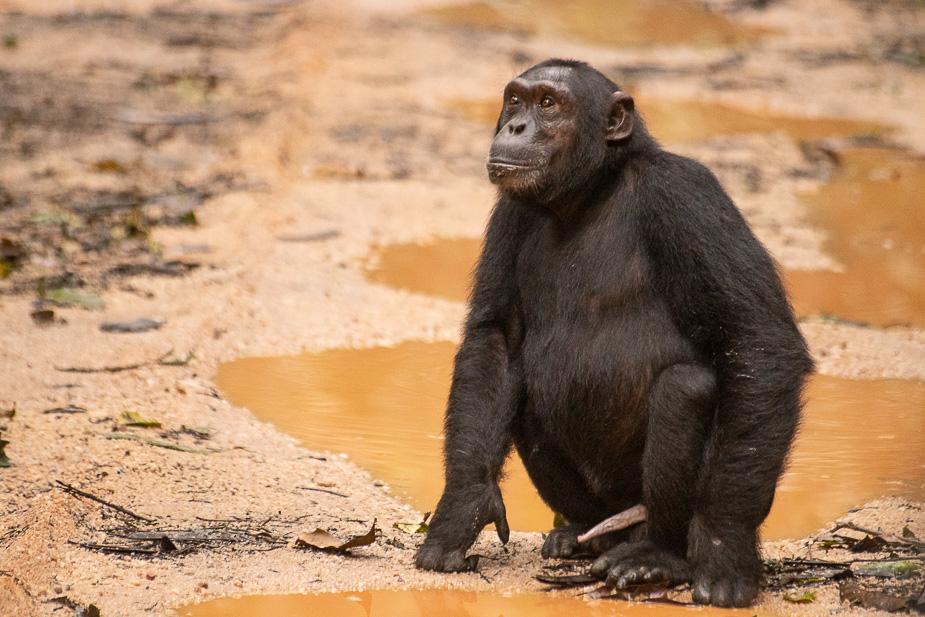 parque-nacional-kibale-chimpances-29