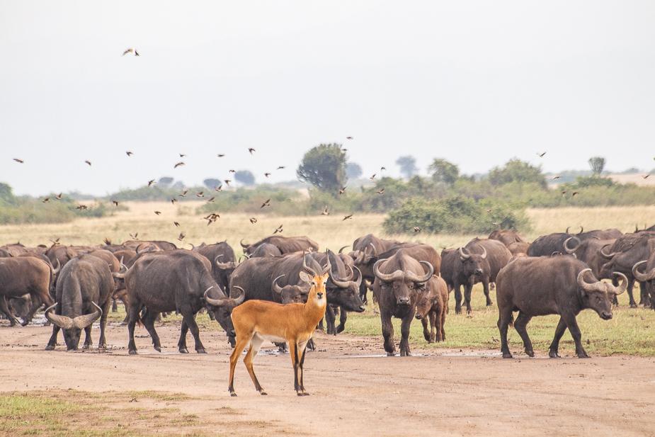 parque-nacional-queen-elisabeth-uganda-11