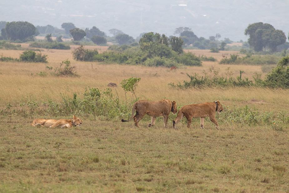 parque-nacional-queen-elisabeth-uganda-13