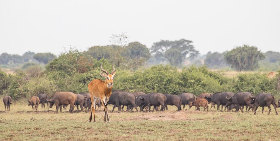 parque-nacional-queen-elisabeth-uganda-15