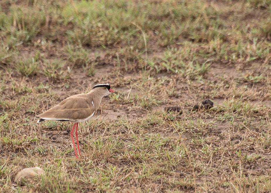 parque-nacional-queen-elisabeth-uganda-17
