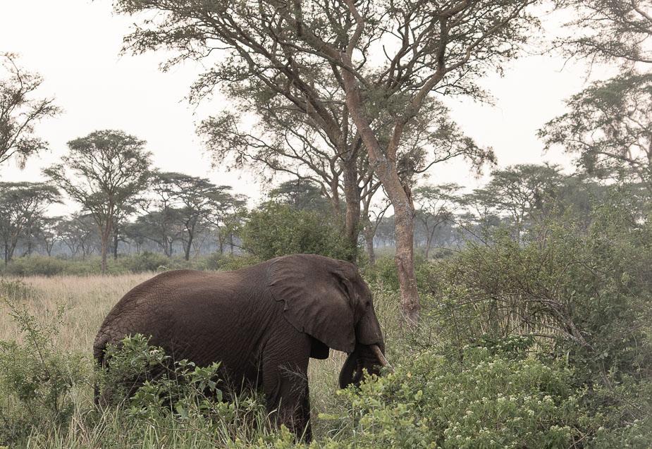 parque-nacional-queen-elisabeth-uganda-18