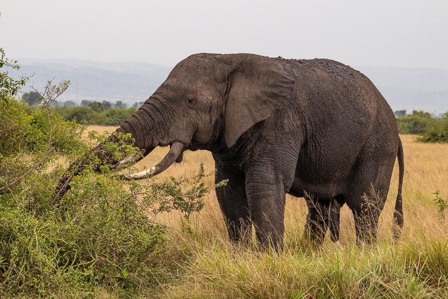 parque-nacional-queen-elisabeth-uganda-2