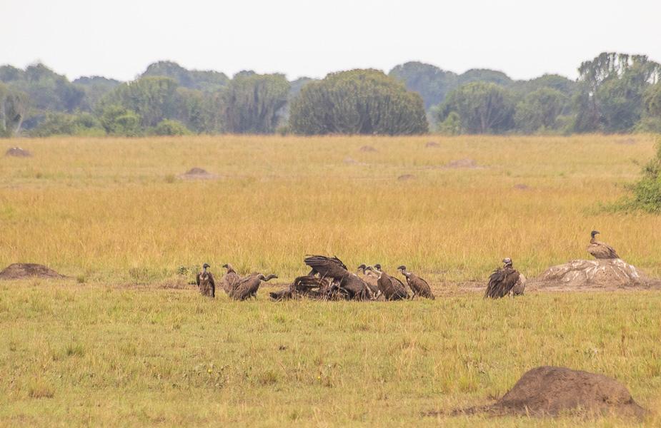 parque-nacional-queen-elisabeth-uganda-4