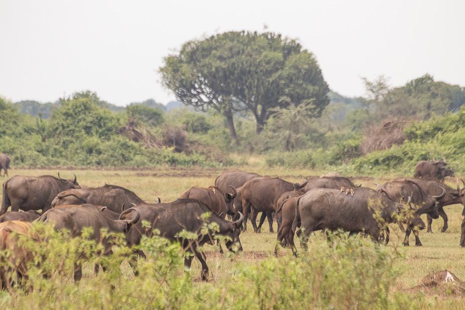 parque-nacional-queen-elisabeth-uganda-6