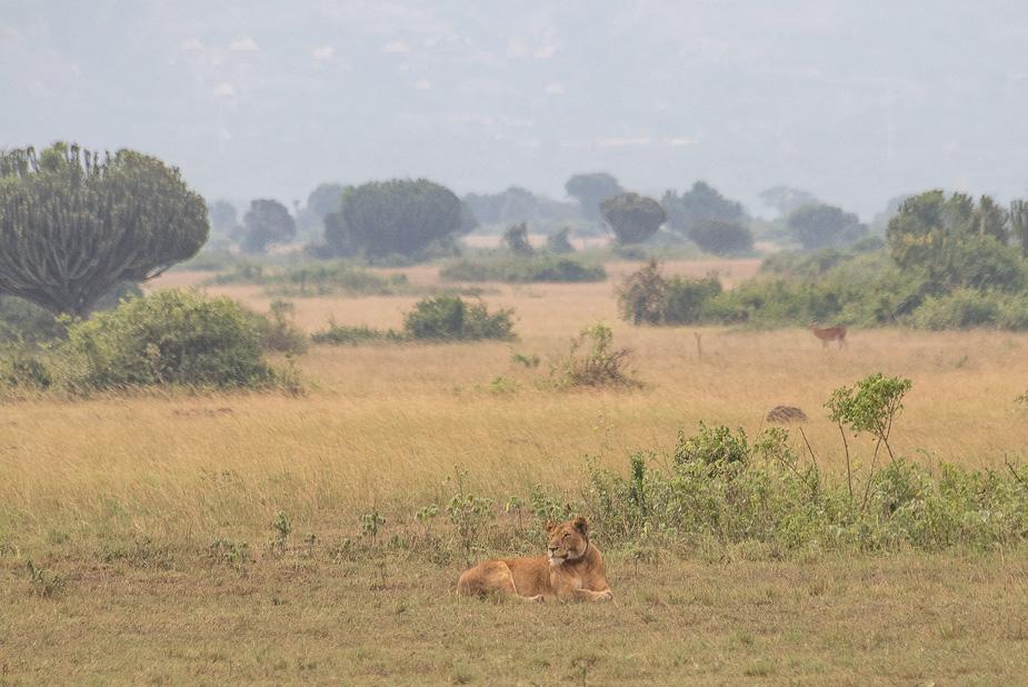 parque-nacional-queen-elisabeth-uganda-7