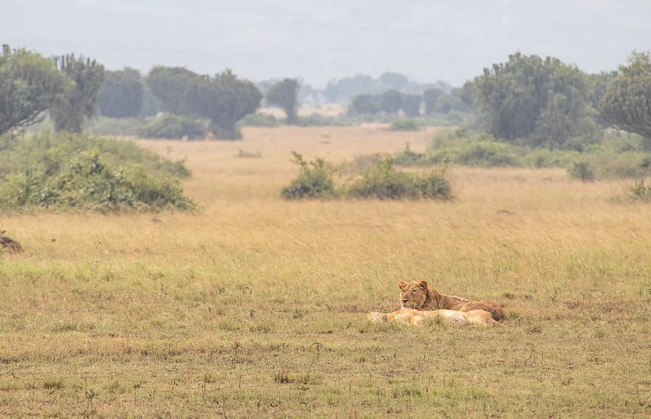 parque-nacional-queen-elisabeth-uganda-8