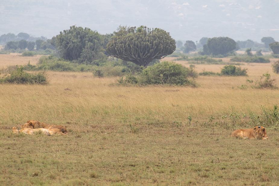 parque-nacional-queen-elisabeth-uganda-9
