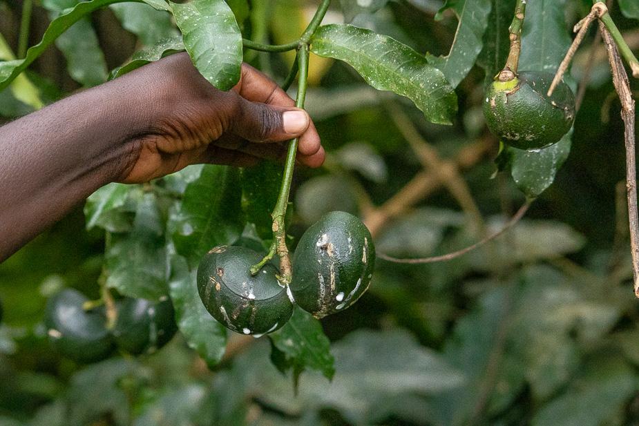 zona-pantanosa-de-bigodi-uganda-10