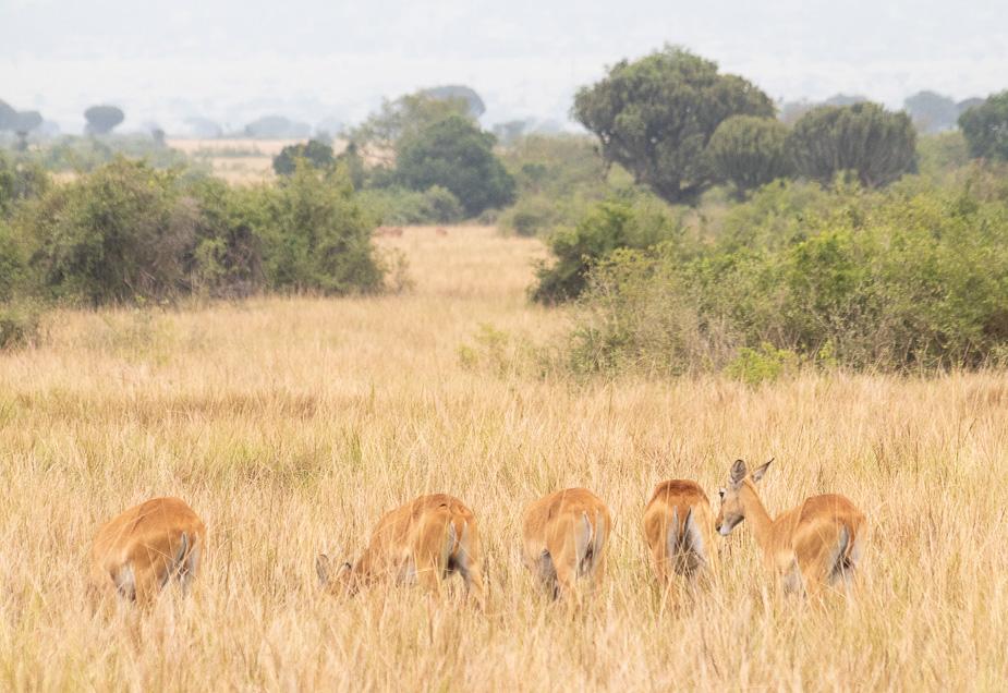 parque-nacional-queen-elisabeth-safari-uganda-10