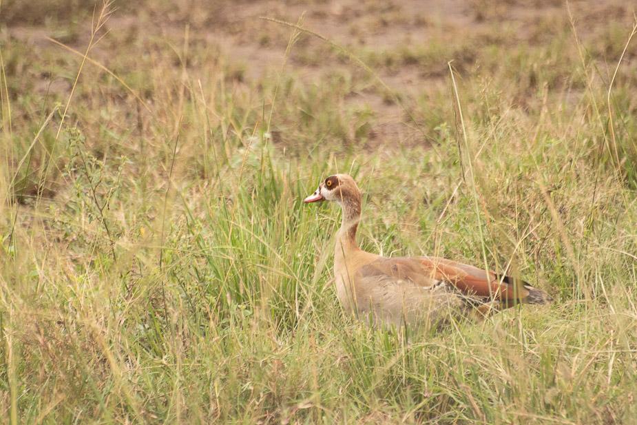 parque-nacional-queen-elisabeth-safari-uganda-11