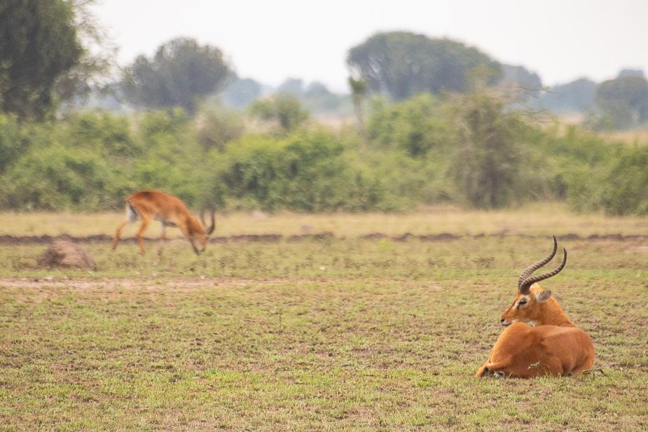 parque-nacional-queen-elisabeth-safari-uganda-12