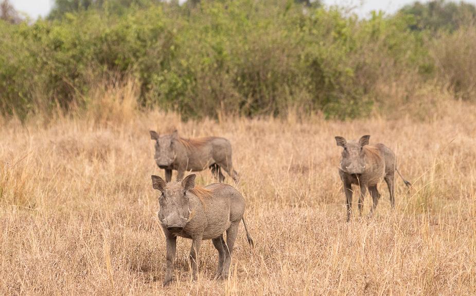 parque-nacional-queen-elisabeth-safari-uganda-13