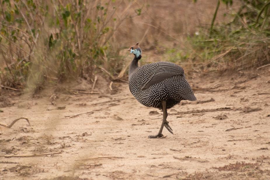 parque-nacional-queen-elisabeth-safari-uganda-14