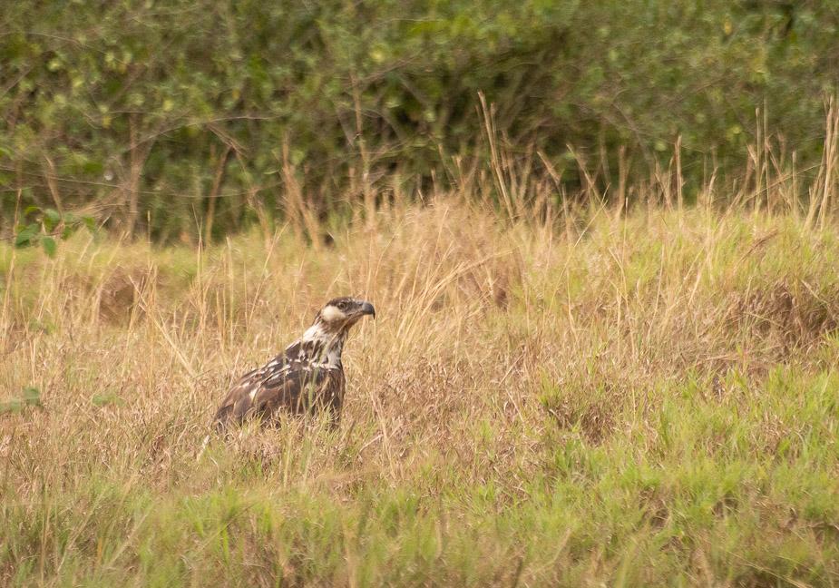 parque-nacional-queen-elisabeth-safari-uganda-15