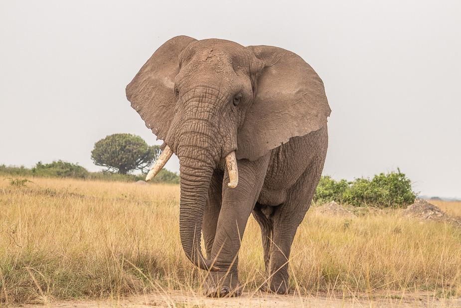 parque-nacional-queen-elisabeth-safari-uganda-18