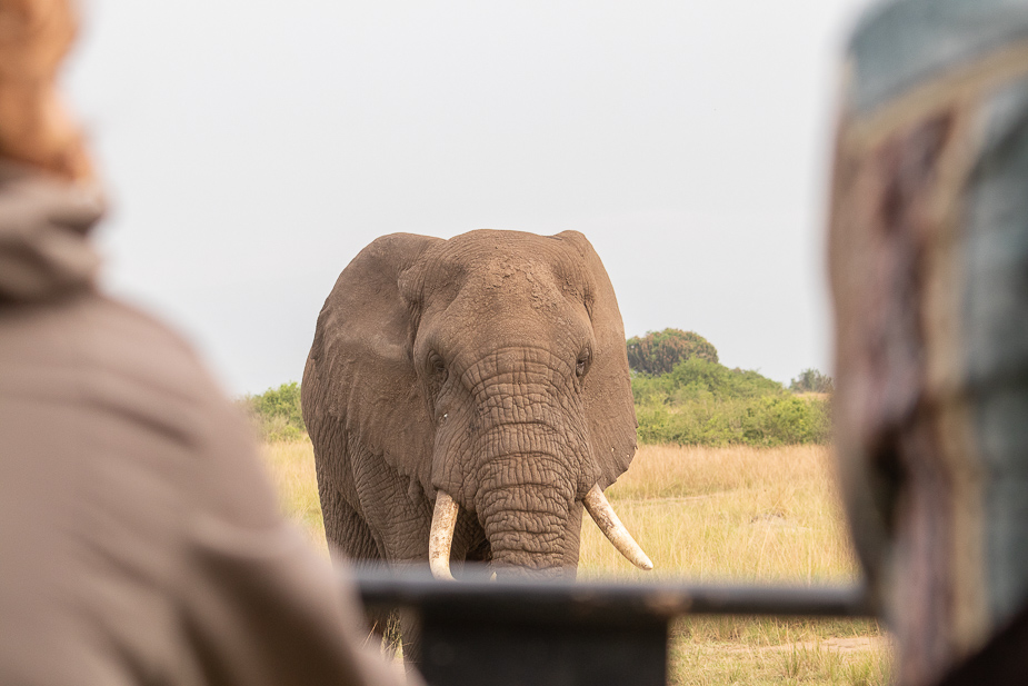parque-nacional-queen-elisabeth-safari-uganda-19