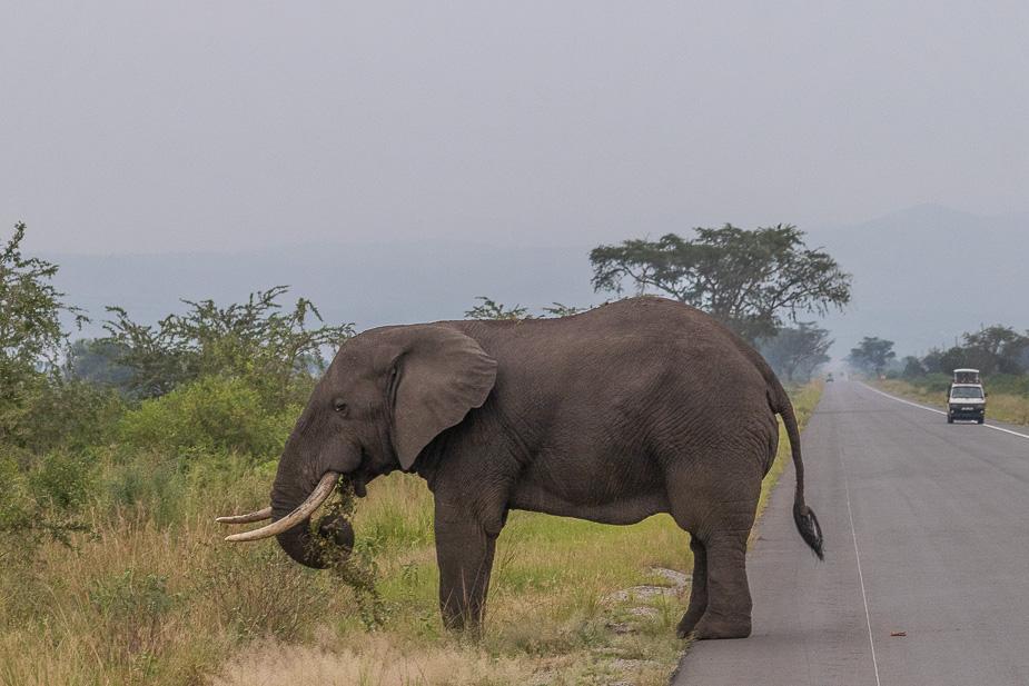parque-nacional-queen-elisabeth-safari-uganda-2
