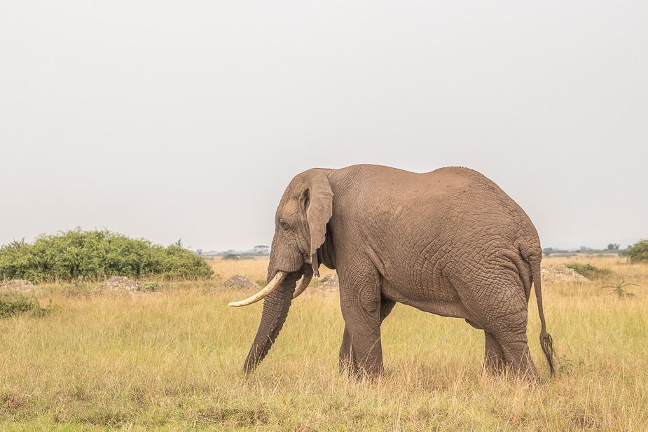 parque-nacional-queen-elisabeth-safari-uganda-20