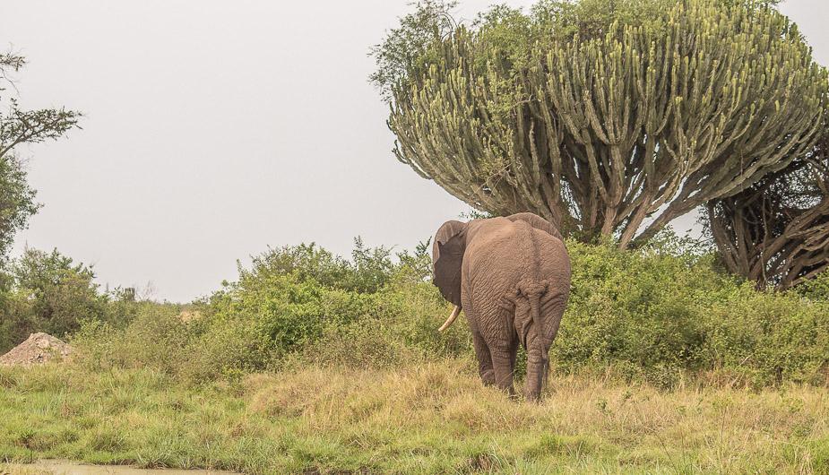 parque-nacional-queen-elisabeth-safari-uganda-21