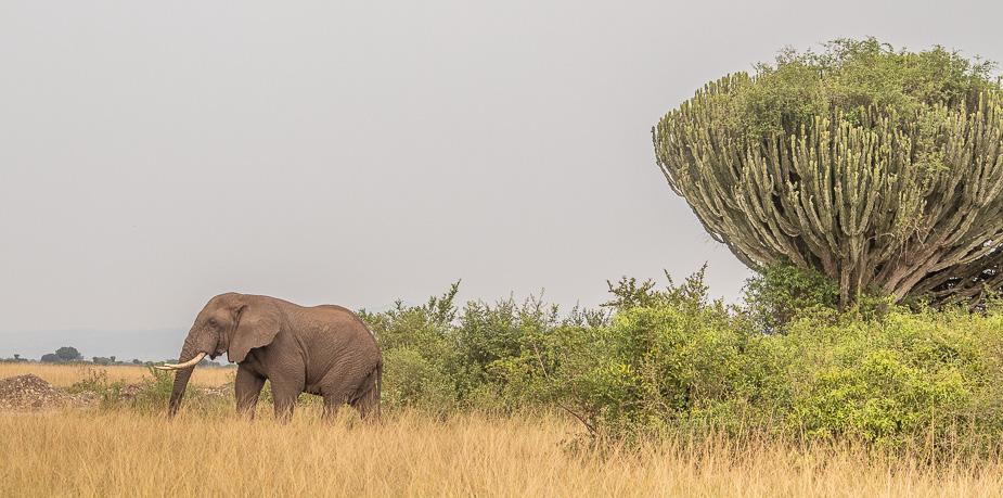 parque nacional queen elisabeth safari uganda (22)